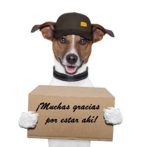 foto-perro-regalo