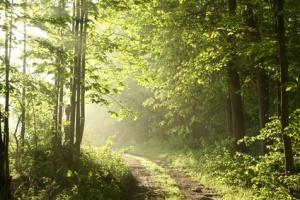 Rayo de sol en medio del bosque